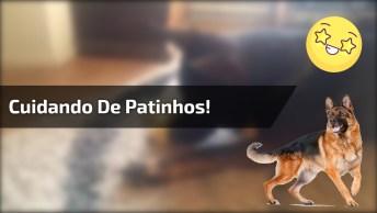 Cachorro Cuidando De Patinhos! Olha Só O Cuidado Dele Com Os Animaizinhos!