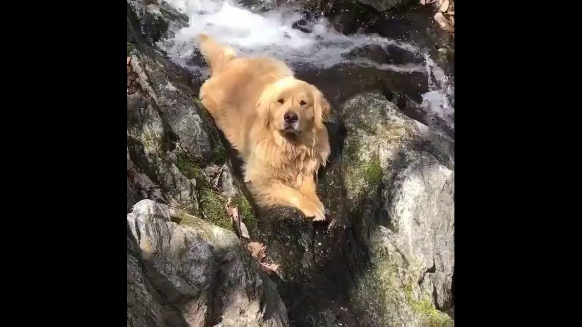 Cachorro curtindo a natureza na cachoeira
