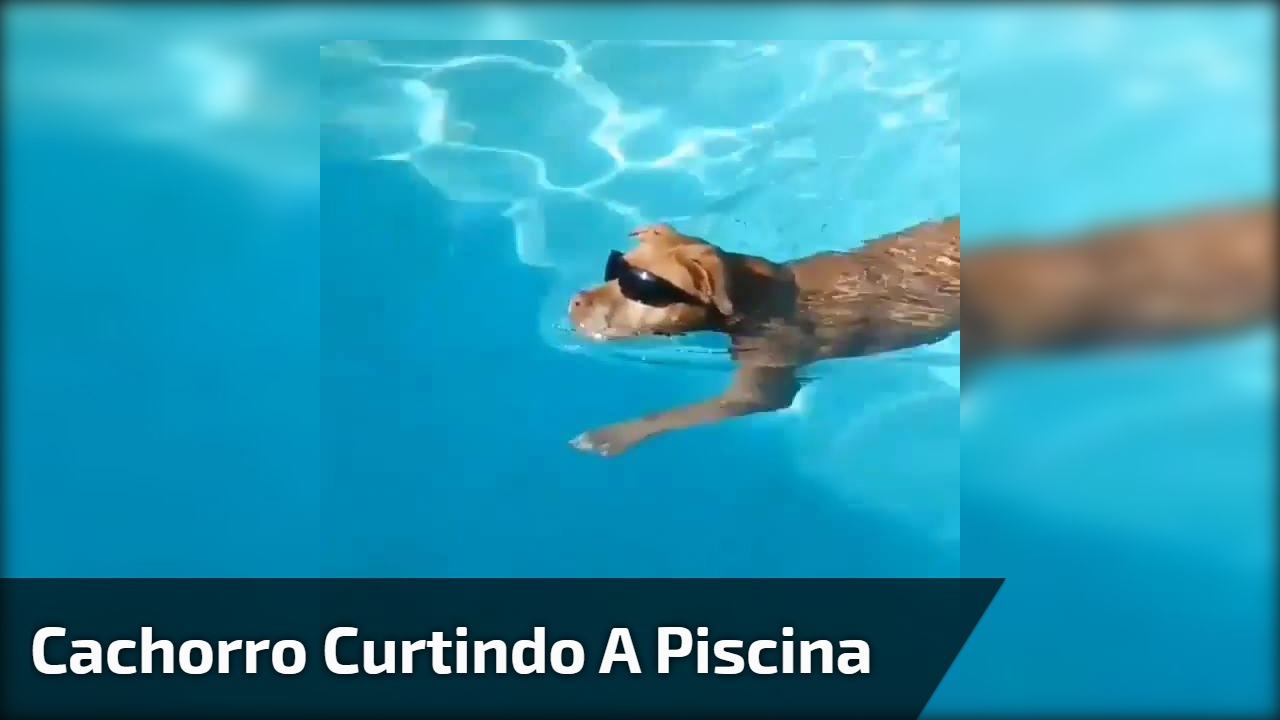 Cachorro curtindo a piscina