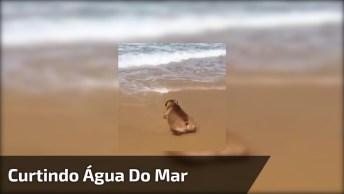 Cachorro Curtindo Água Do Mar, Neste Calor Não Tem Nada Mais Gostoso!