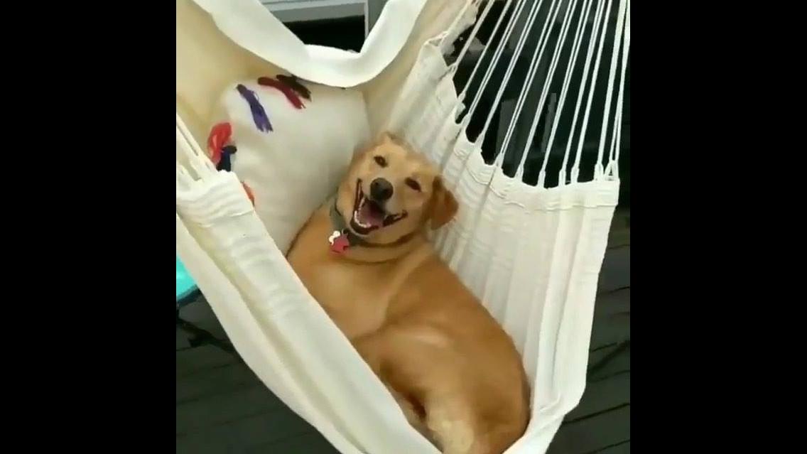Cachorro curtindo rede depois de almoço de domingo