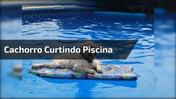 Cachorro Curtindo Uma Piscina No Verão, Olha Só A Carinha Dele!