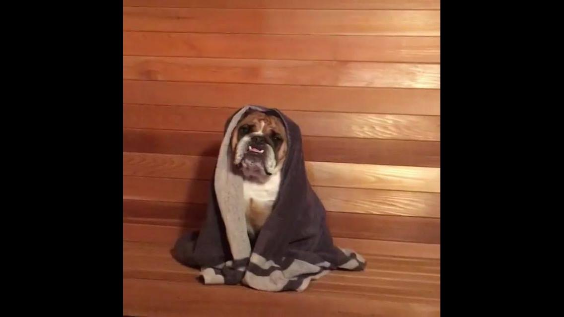 Cachorro curtindo uma sauna