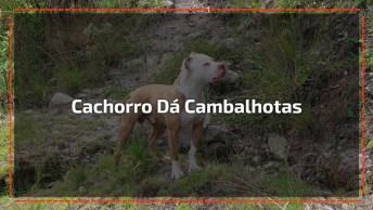 Cachorro Dá Cambalhotas No Ar De Alegria Pela Chegada Do Fim De Semana Kkk!