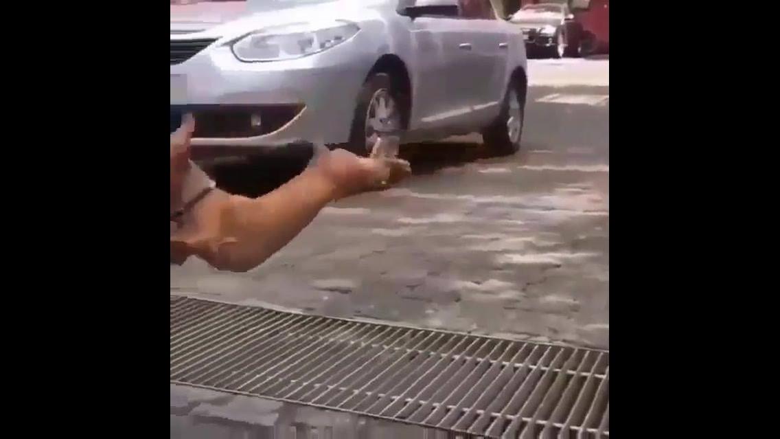 Cachorro dá pulo voador, como ele conseguiu fazer isso? Confira!