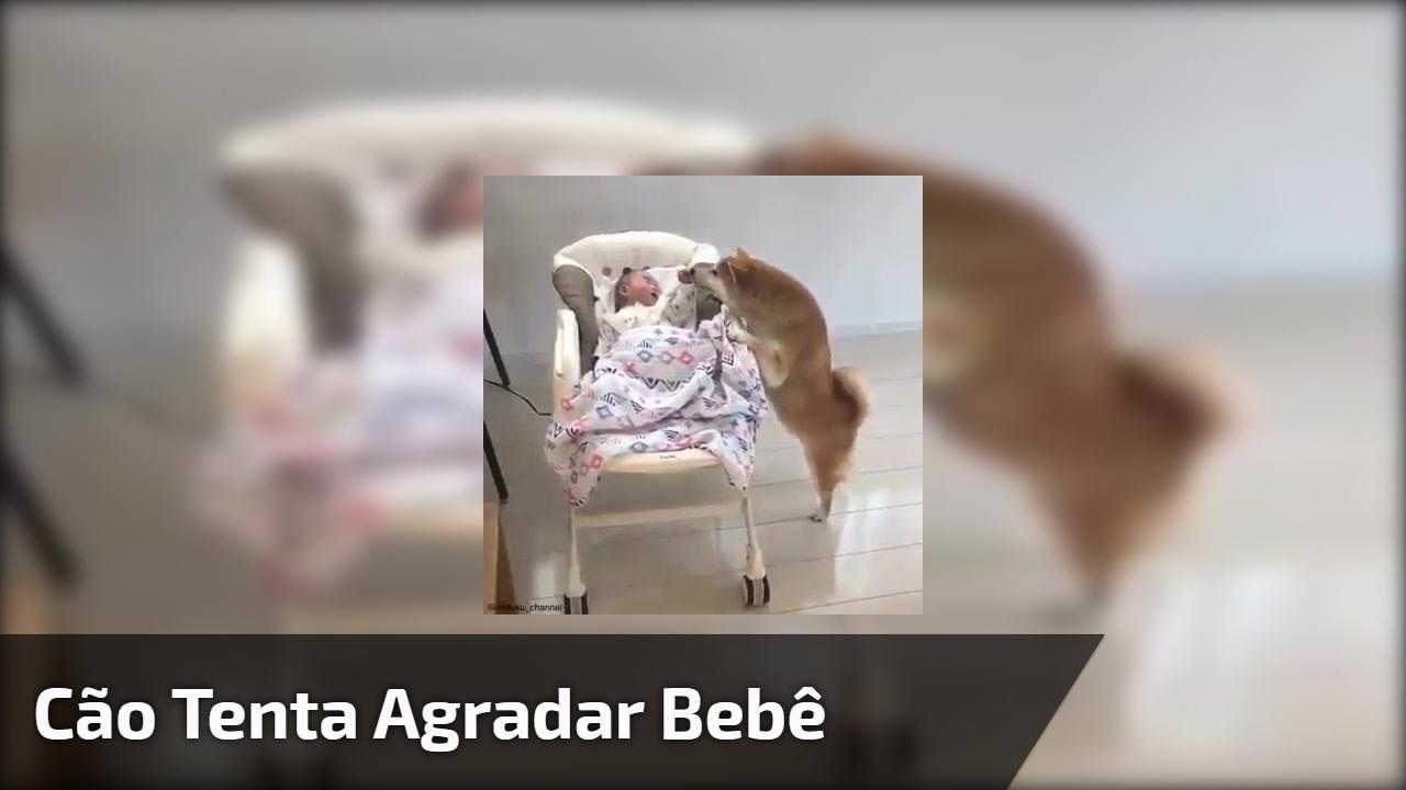 Cão tenta agradar bebê