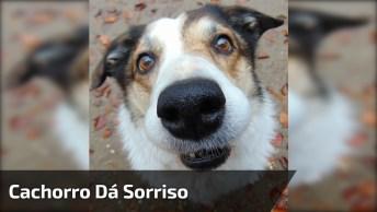 Cachorro Dá Sorriso Para Sua Tutora Enquanto Ela Canta!