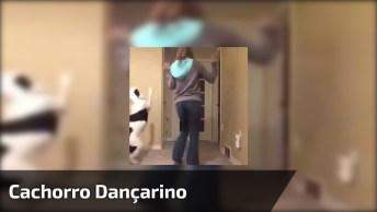 Cachorro Dançarino, Ele Adora Dançar Com A 'Mamãe', Confira!