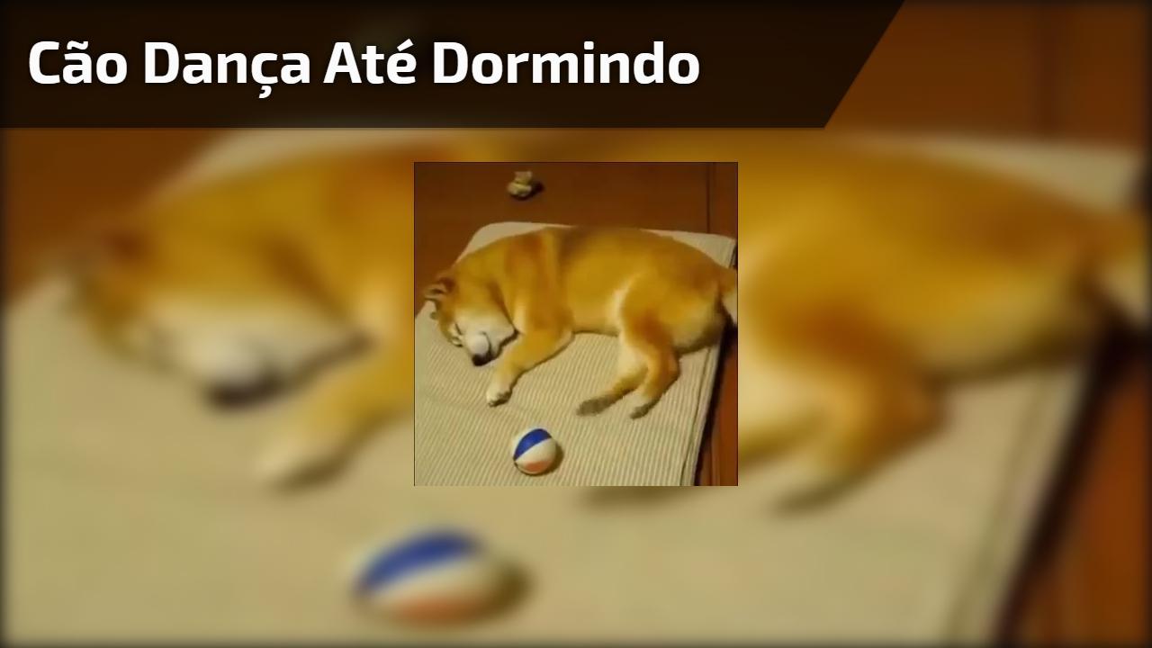 Cão dança até dormindo