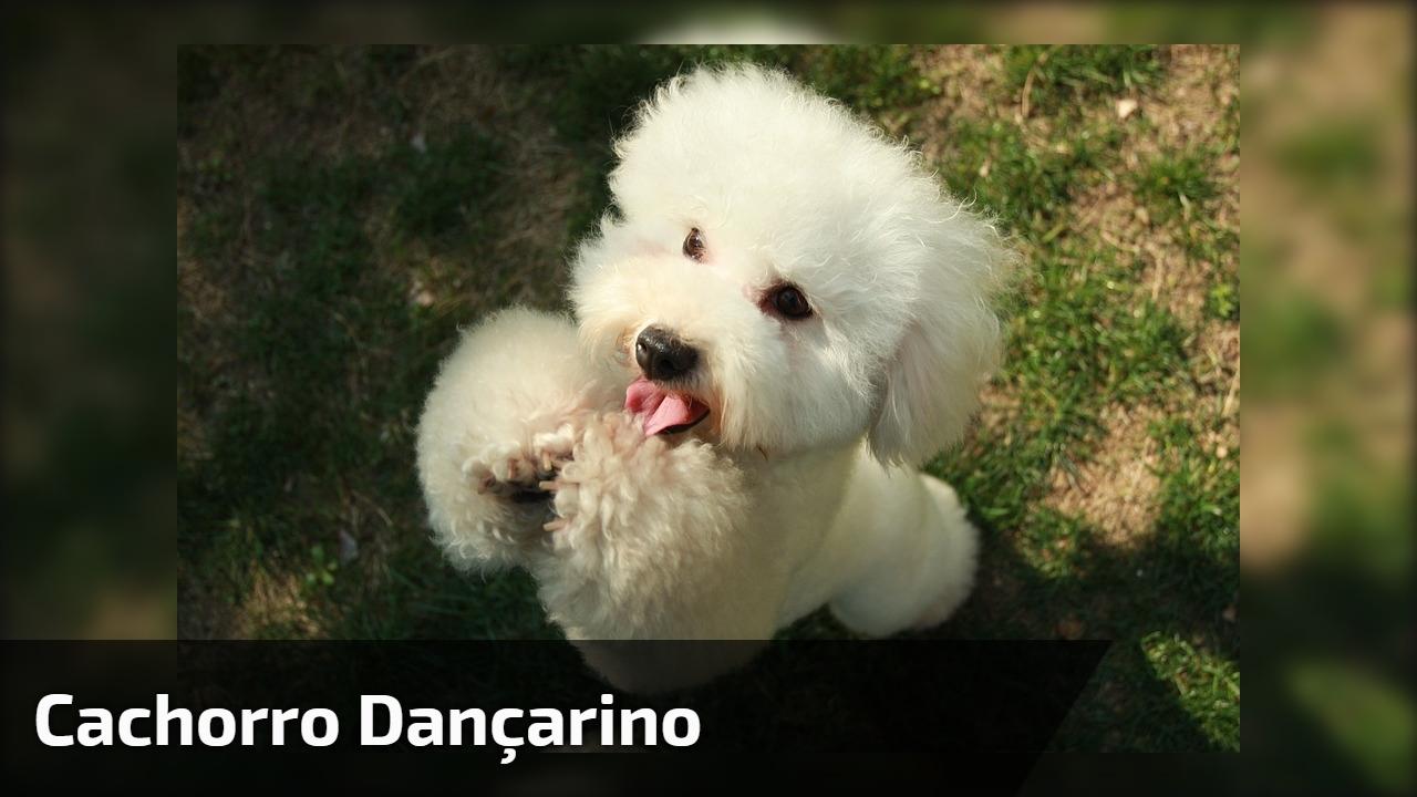 Cachorro dançarino, esse dança mais do que gente, confira!