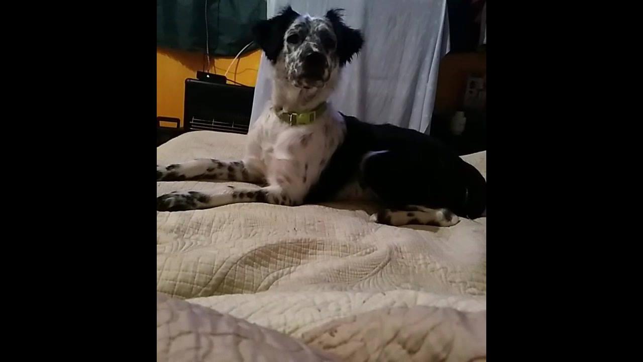 Cachorro dando a alegria na casa, ele é muito fofo