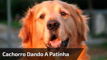 Cachorro Dando A Patinha No Caixa De Mercado, O Que Será Que Ele Esta Querendo?