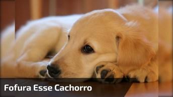 Cachorro Dando A Patinha Sem Ninguém Pedir, Veja Que Fofura De Cão!