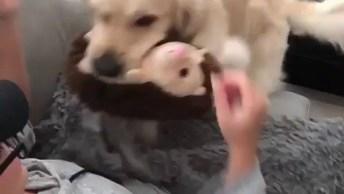 Cachorro Dando Bom Dia Para Sua Dona, Que Cena Mais Adorável, Confira!