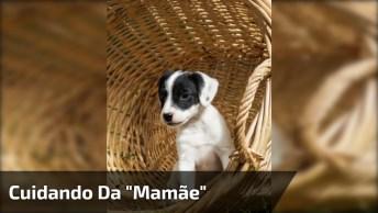 Cachorro Dando Carinho Para A 'Mamãe' Que Esta Grávida, Que Lindo!