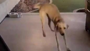 Cachorro Dando Saltos De Alegria Ao Ver Sua Dona, Olha Só A Carinha Dele!