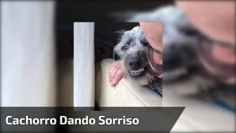 Cachorro Dando Sorriso Forçado Para O Humano, Ele É Muito Engraçado Hahaha!
