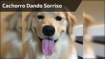 Cachorro Dando Sorriso Lindo De Acordo Com A Música, Que Engraçado Hahaha!