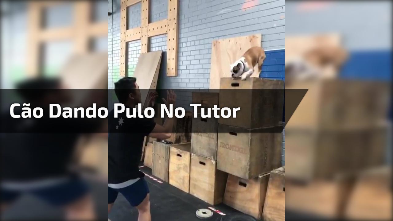 Cão dando pulo no tutor
