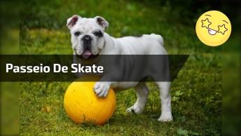 Cachorro Dando Um Passeio De Skate No Famoso Elevado Presidente Costa E Silva!