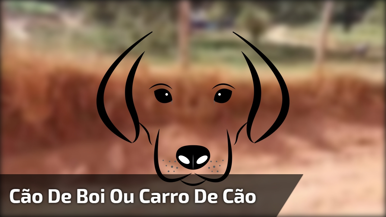 Cão de boi ou carro de cão