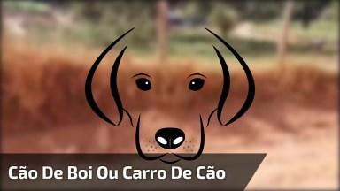 Cachorro De Boi Ou Carro De Cachorro, Escolha Pelo Que Quer Chamar!
