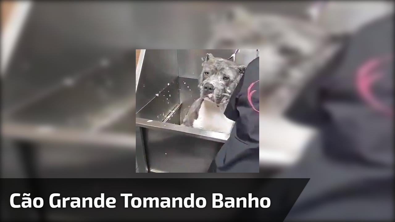 Cão grande tomando banho