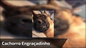 Cachorro Deitado De Pernas Pro Ar Com, Veja Que Carinha Engraçada!