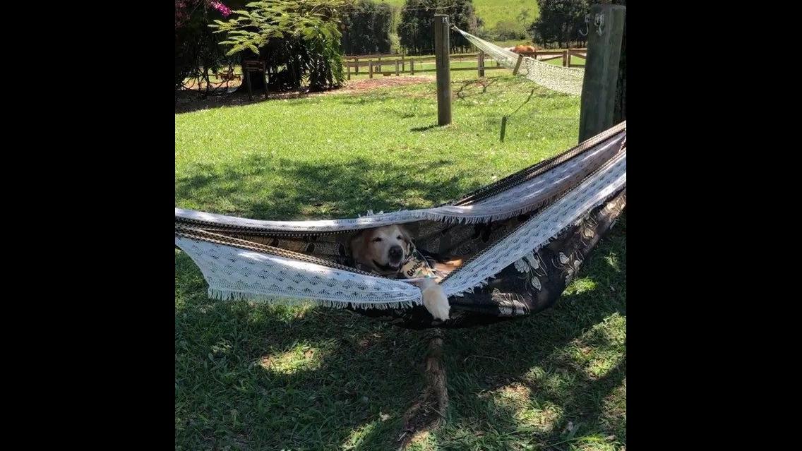 Cachorro deitado em rede