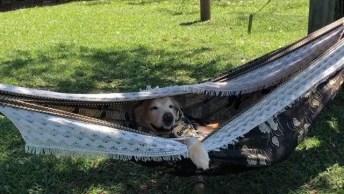 Cachorro Deitado Em Rede, Olha Só A Carinha De Preguiça Dele!