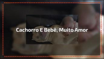 Cachorro Deixando Bebê Deitar Em Sua Barriga, Muito Amor Envolvido!