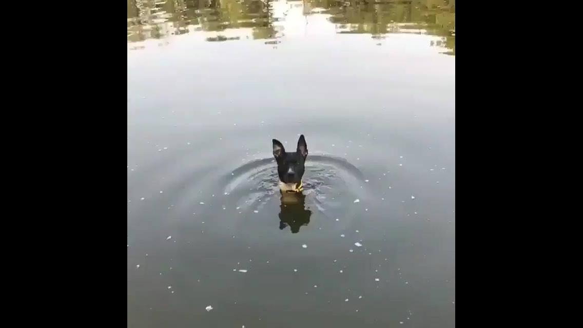 Cachorro dentro de lago com a carinha mais engraçada que você já viu