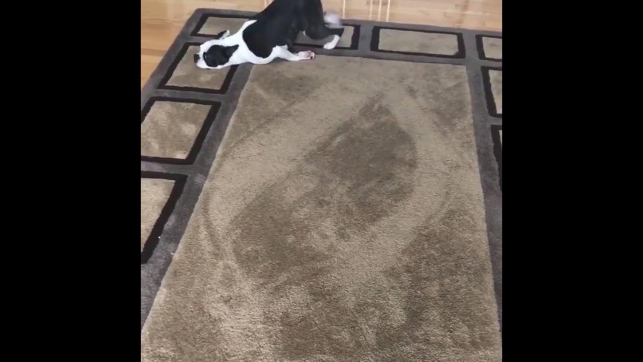 Cachorro desanimado para se levantar do chão