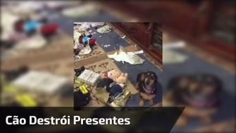 Cachorro 'Destrói' O Natal E Depois Fica Com Cara De Arrependido!