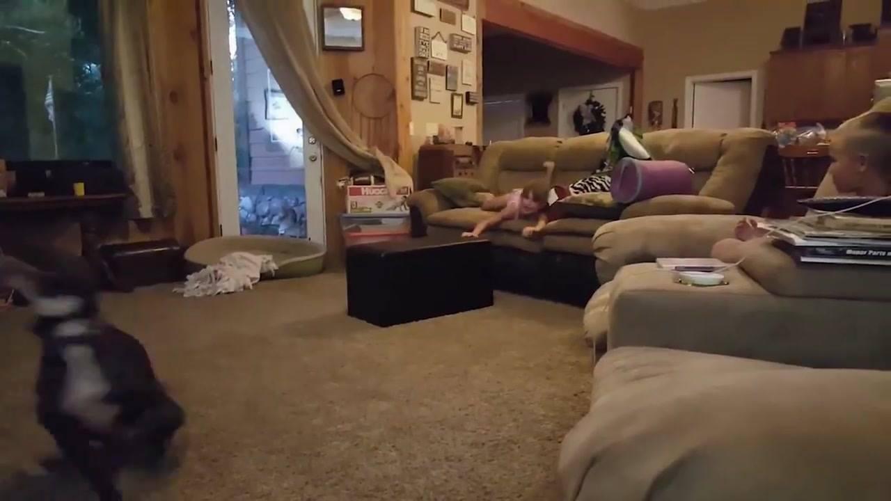 Cachorro divertindo as crianças, kkk! Olha só como ele é engraçado!!!