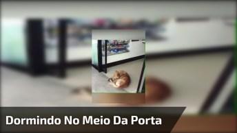 Cachorro Dorme No Meio De Porta Automática, Parece Que Ele Não Está Nem Ai!