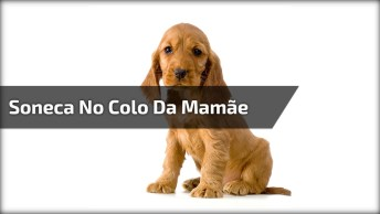 Cachorro Dormindo De Barriga Para Cima No Colo Da Mamãe, Veja Que Amor!