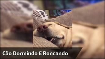 Cachorro Dormindo E Roncando, Olha Só Que Coisa Mais Fofa!