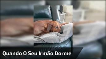 Cachorro Dormindo, E Seu Amigo Fazendo Uma Gracinha Para Brincar, Hahaha!