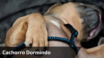 Cachorro Dormindo E Sonhando Que Esta Mamando, Olha Só Esta Língua!