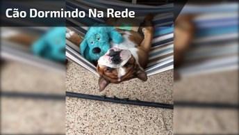 Cachorro Dormindo Na Rede Junto Com Seu Ursinho De Pelúcia!