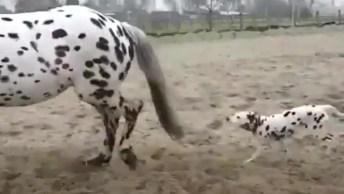 Cachorro E Cavalo Com Pintinhas Pretas, Será Que O Cachorro Se Identificou?