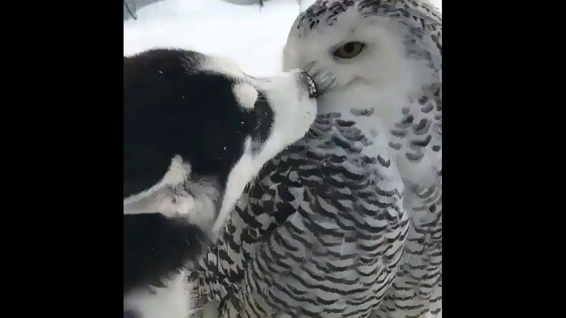 Cachorro e coruja, uma amizade inusitada que deu certo, confira!