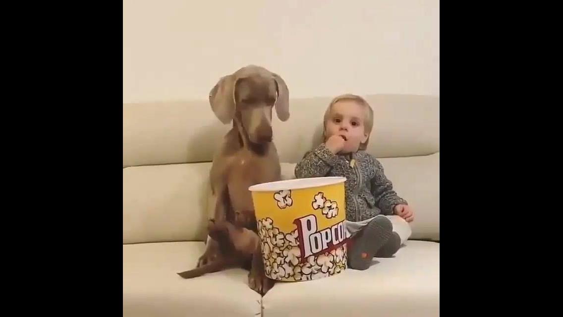 Cachorro e criança comendo pipoca juntos