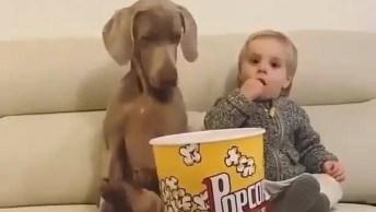 Cachorro E Criança Comendo Pipoca Juntos, Que Amizade Mais Linda!
