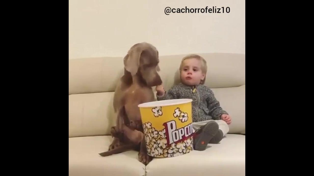 Cachorro e criança curtindo uma pipoquinha