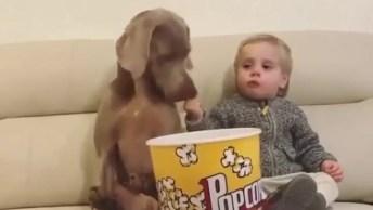 Cachorro E Criança Curtindo Uma Pipoquinha, Tipo Cinema Com Os Amigos!