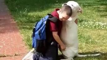 Cachorro E Criança Dando Um Abraço Sincero, Quanto Amor Neste Vídeo!
