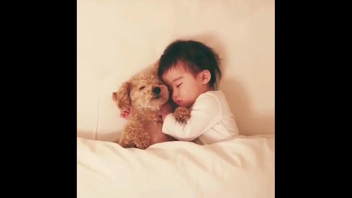 Cachorro e criança em sono profundo