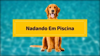 Cachorro E Criança Nadando Em Piscina Pequena, Confira!